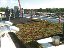 the virtues of vegetation professional roofing magazine