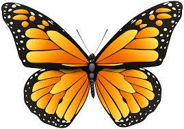orange butterfly png clip art best web clipart