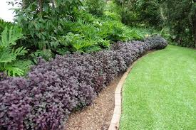 ideas for low maintenance garden small corner new home rule best