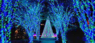 atlanta botanical garden lights garden lights media page atlanta botanical garden