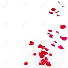 rose petals stock photos u0026 pictures royalty free rose petals