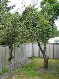 donate fruit from your trees seattle real estate