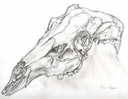 deer skull by calamari san on deviantart