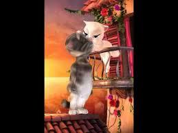 imagenes groseras de gatos gato tom grosero 2014 youtube
