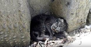 Kitten Bed Poor Kitten Lying On The Roadside Finally Get Warm Bed And Home