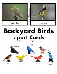 free backyard birds 3 part cards from in our pond free printable