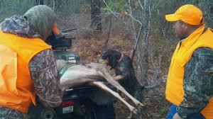 bluetick coonhound weight athena2 jpg