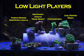 Reef Aquarium Lighting Mr Saltwater Tank U0027s Led Experiment U2013 Mr Saltwater Tank