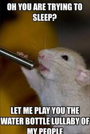 Rodent Meme - 12 hilarious rat memes from around the internet rats make me happy