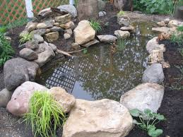 wildlife pond our tiny homestead