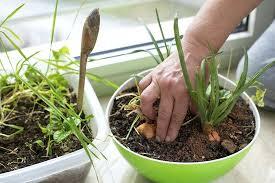grow light indoor garden indoor garden light bulbs best light bulb for growing plants grow