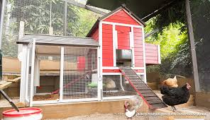 Can You Have Chickens In Your Backyard Will My Council Allow Me To Keep Chickens