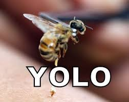 Yolo Meme - the yolo wasp viral viral videos