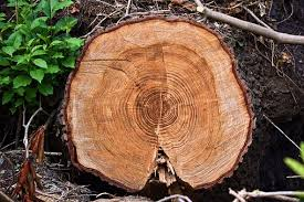 tree rings images images Tree rings images pixabay download free pictures jpg