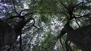 trees in stock footage 5834831