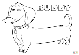 buddy from the secret life of pets coloring page free printable