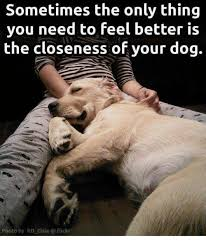 Feel Better Meme - sometimes the only thing you need to feel better is the closeness of