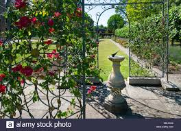 trellis with climbing roses stock photos u0026 trellis with climbing