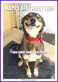 Funny Meme Dog - happy birthday memes with funny cats dogs and cute animals