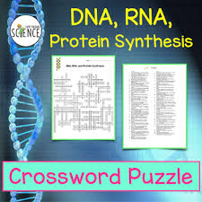 dna rna protein synthesis crossword puzzle by amy brown science