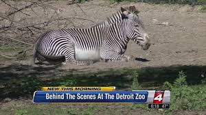 Detroit Zoo Night Lights by Detroit Zoo To Light Up The Night At Wild Lights Opening