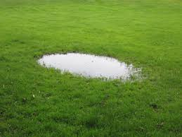learn what to so about areas of lawn wherte puddles form