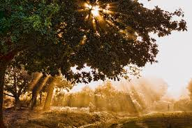 outdoor tree lights for summer free images landscape tree nature forest outdoor branch