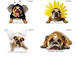 card invitation design ideas dog birthday cards facebook happy