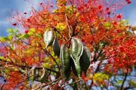 australian native plant seeds native night cream u2013 native natural skin care