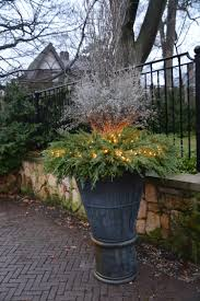 the case for planting winter pots dirt simple