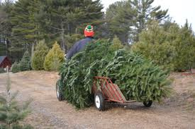 christmas tree farm easton ct christmas and accessories