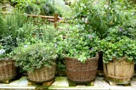 The Summer And Winter Garden - herb gardening summer and winter off the grid news