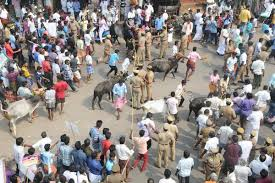 Seeking In Trichy Protests Seeking Jallikattu Continue In Tiruchi Region Trichy