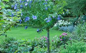 don t downsize your trees upsize a shrub telegraph