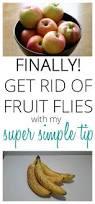 best 25 fruit flies vinegar ideas on pinterest fruit flies