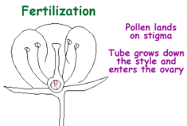 Where Is The Pollen Produced In A Flower - great plant escape plant parts