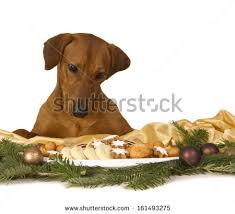 young man jogging his dog through stock photo 9248653 shutterstock