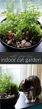 how to make an amazing diy indoor cat garden the anti june cleaver