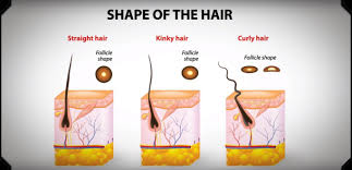 here s the reason why some hair while others