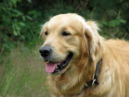 hd cute dog animal wallpaper free downloads webextensionline