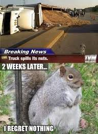 Rodent Meme - lawlz laugh out loud on this humor site with funny pictures and