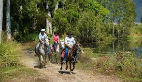 cairns car guide horse riding cairns