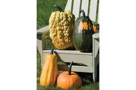 Lunch Lady Gourd Seed Johnny U0027s Selected Seeds