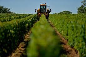 chambre d agriculture de la nievre les exploitants viticoles de la nièvre manquent d ouvriers qualifiés