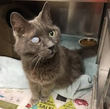 Blind Cat Sanctuary 18 Year Old Cat Blind In One Eye Terrified In Shelter Until Woman