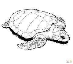 coloring pages turtle coloring turtle coloring parking