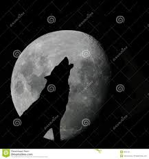 wolf howling at full moon stock illustration image of ululate