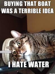 Cat Buy A Boat Meme - existential crisis cat regrets his investment meme on imgur