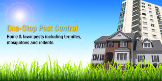 organic u0026 chemical pest control and termite service for tampa