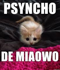 Meme Cinco De Mayo - kitten ready to pounce for cinco de mayo meme on imgur